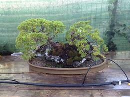 Bonsai, vasi, tavolini da esposizione