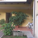 Ficus beniaminoper ragioni